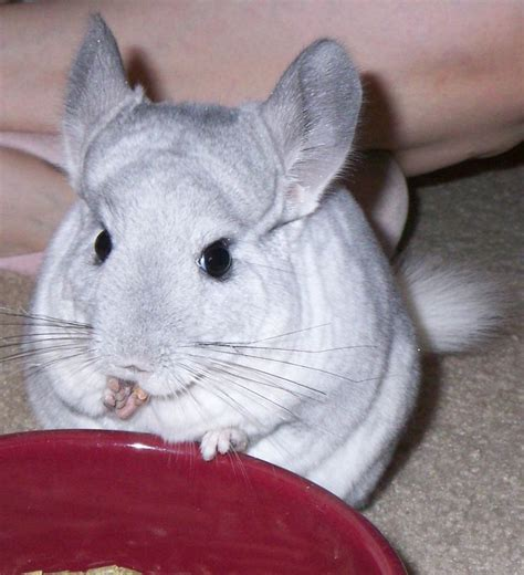 [pdf] The Complete Debt Relief Manual - Warbaycaternapho Webs Com.